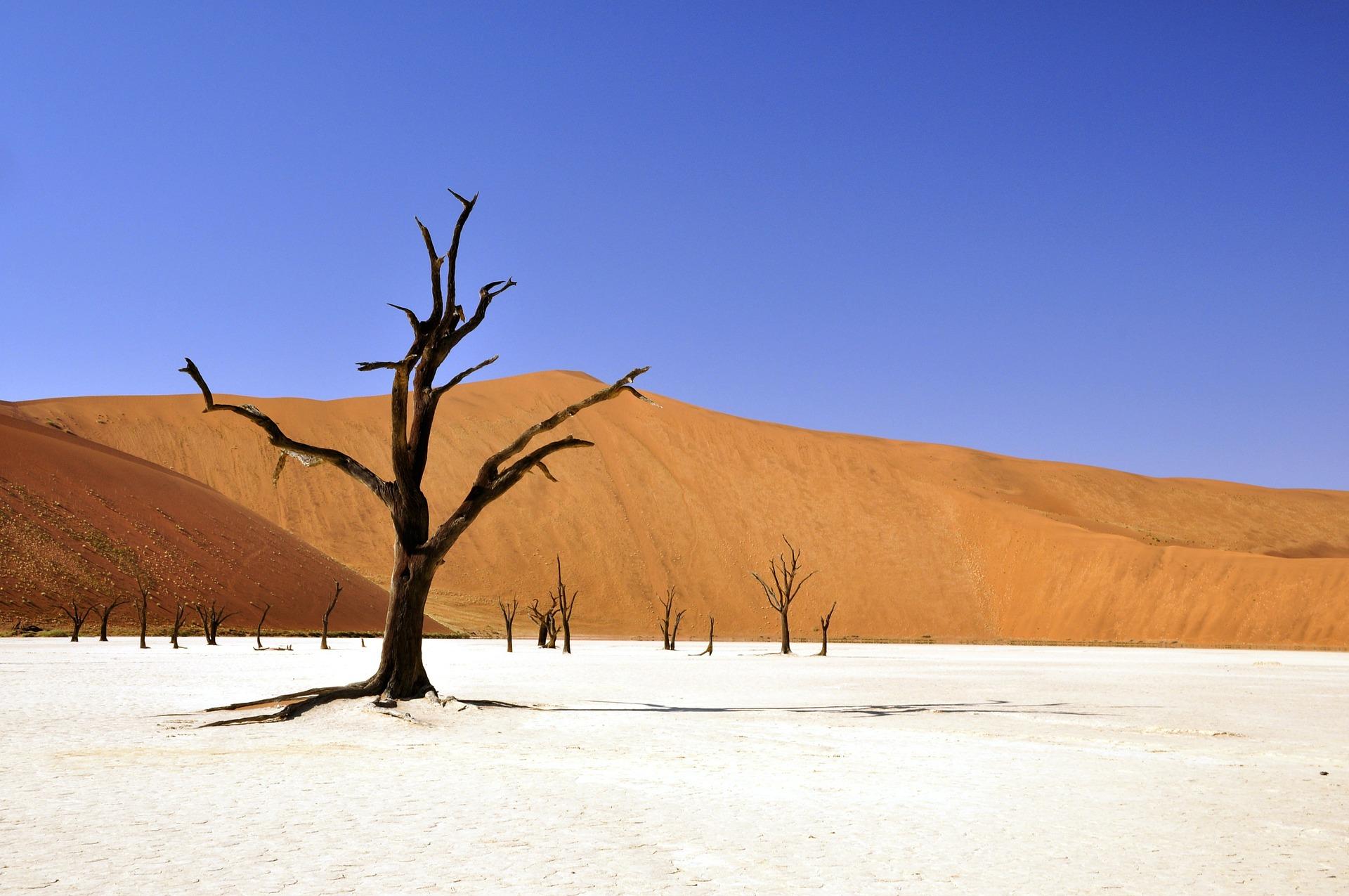 Les bases du débat climatique: Le climat pourrait causer la mort de 6 milliards de personnes