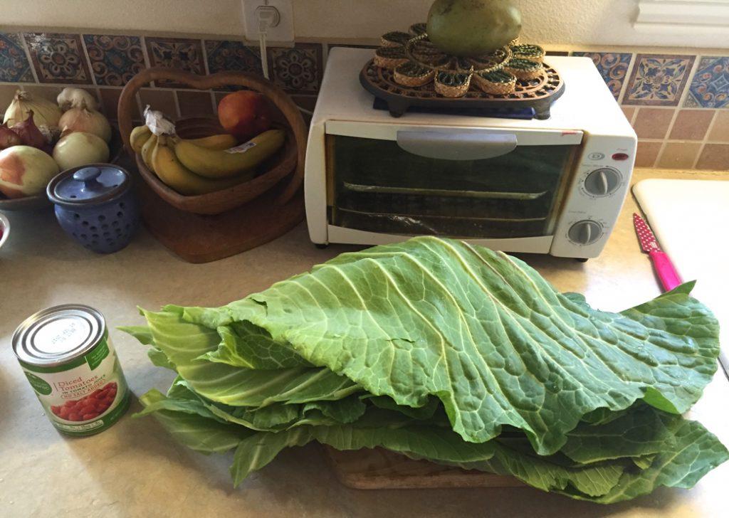 Deux feuilles de chou géant, coupées en deux. (photo par Eva Cohnen Brown)