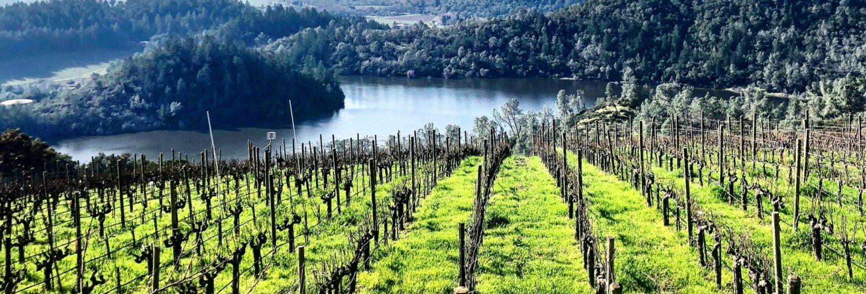 Balade dans le fascinant monde du vin