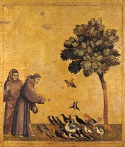 st francisbirds