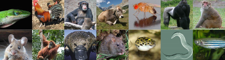 Des questions sur l'évolution ? Profitez, les biologistes de l'évolution envahissent Lausanne