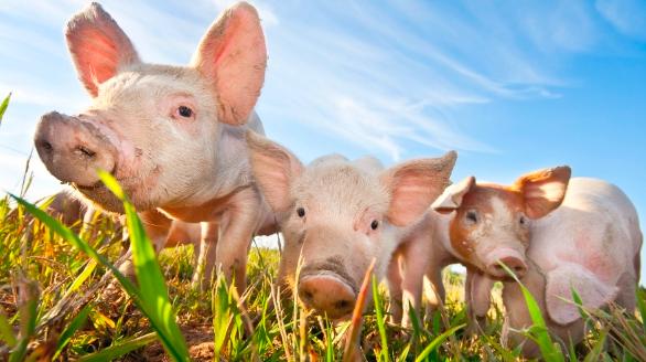 Initiative Fair Food pour des aliments équitables: de quoi parle-t-on?