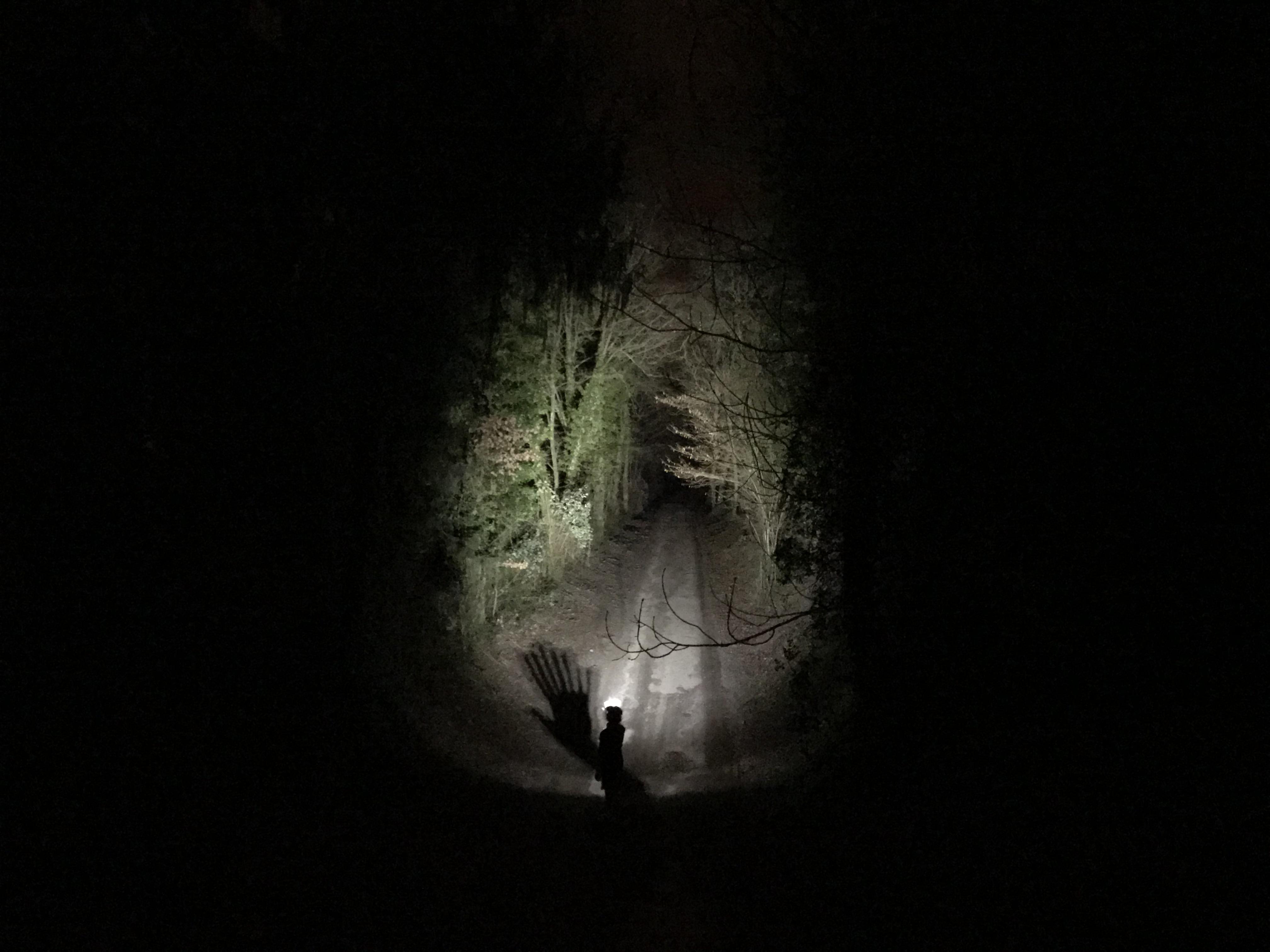 Dans la forêt de Blair Witch