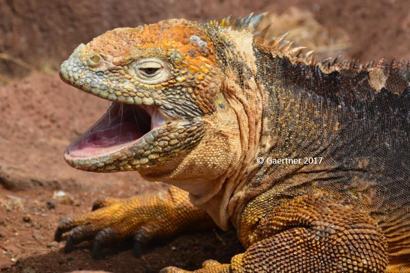 Les Galápagos  : Une terre pleine de surprises !