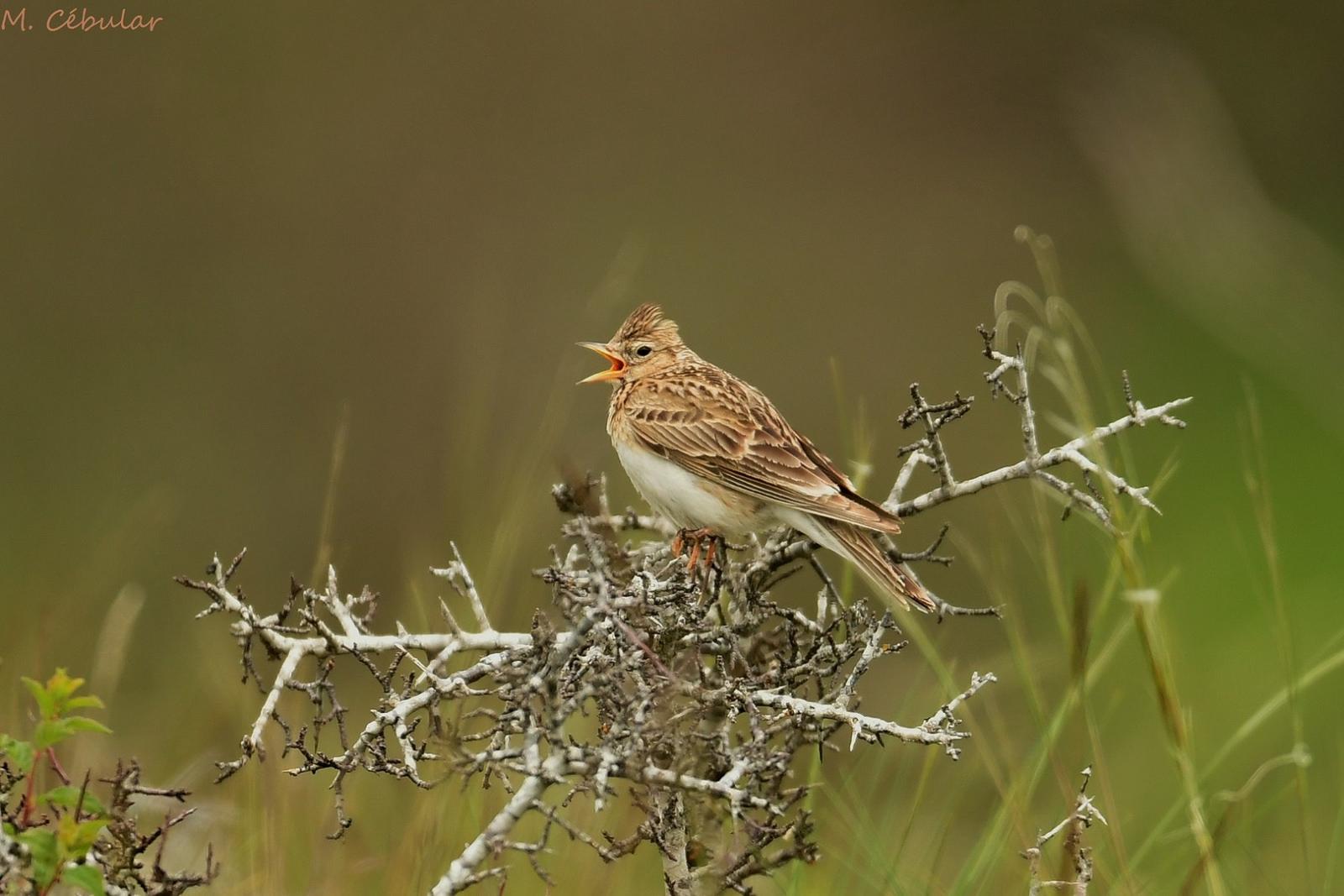 Oui, la disparition annoncée des oiseaux est une bonne nouvelle !