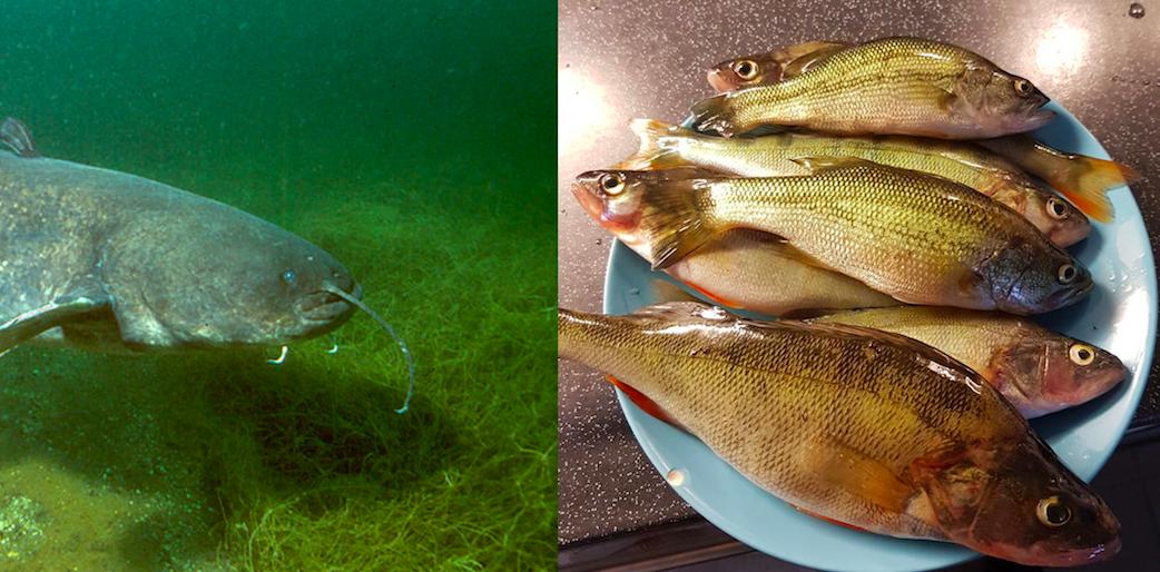 D'où viennent nos poissons ?