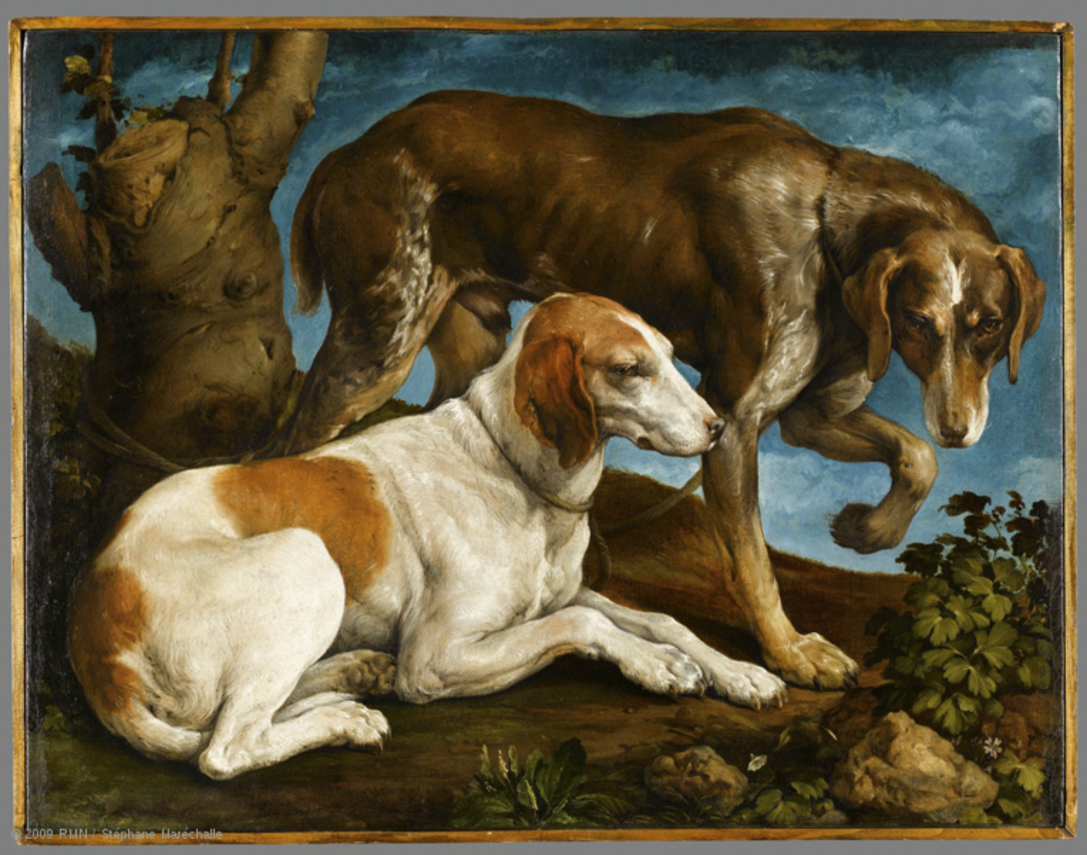 A la découverte de l'art vétérinaire